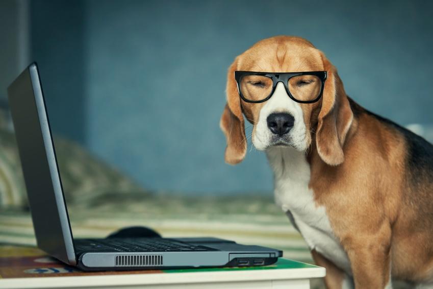 Vétérinaire et e-santé